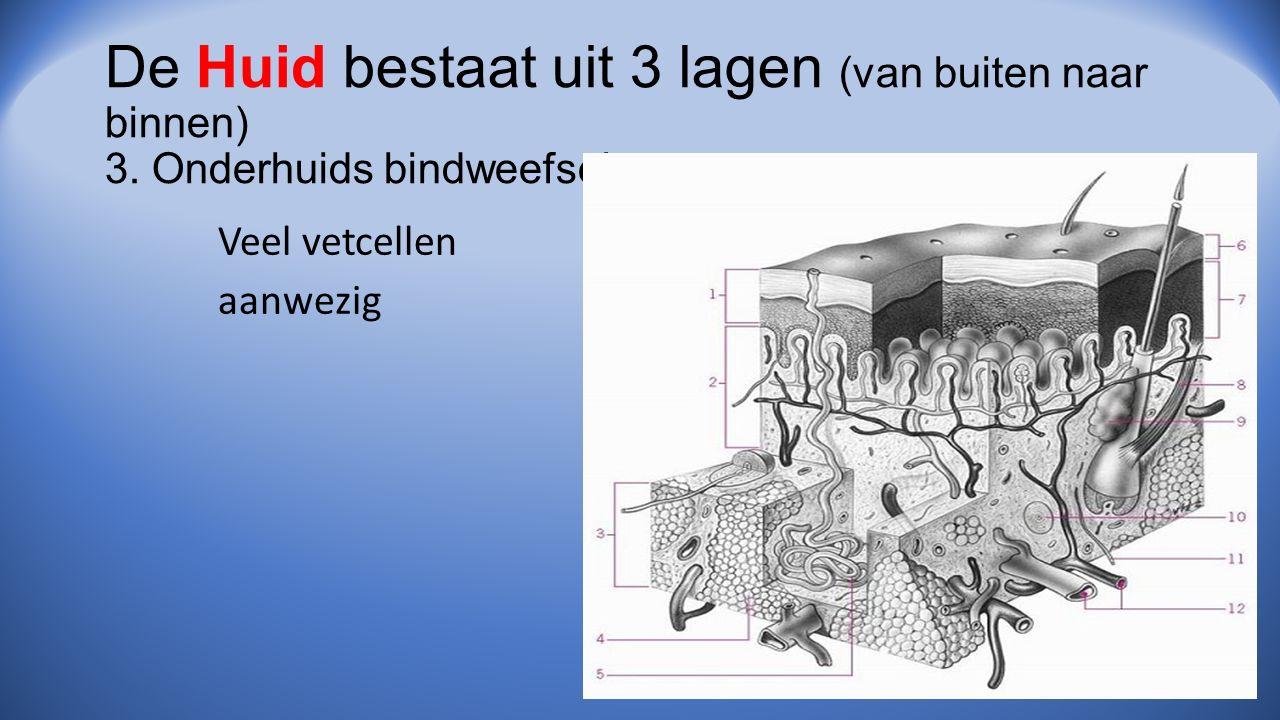 De Huid bestaat uit 3 lagen (van buiten naar binnen) 3. Onderhuids bindweefsel Veel vetcellen aanwezig