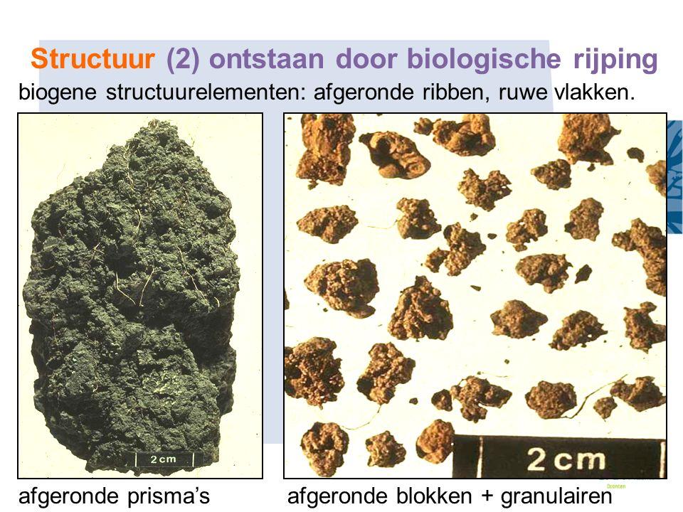 biogene structuurelementen: afgeronde ribben, ruwe vlakken. afgeronde prisma's afgeronde blokken + granulairen Structuur (2) ontstaan door biologische