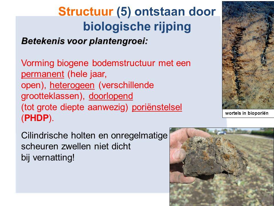 Betekenis voor plantengroei: Vorming biogene bodemstructuur met een permanent (hele jaar, open), heterogeen (verschillende grootteklassen), doorlopend