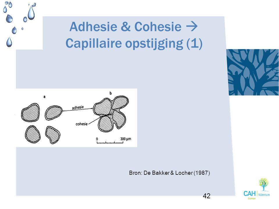 Adhesie & Cohesie  Capillaire opstijging (1) 42 Bron: De Bakker & Locher (1987)
