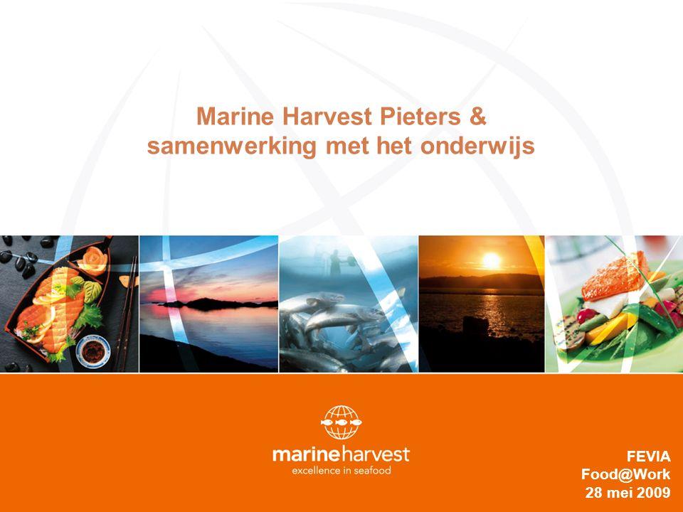 De Marine Harvest Groep o Marine Harvest is 's werelds grootste aquacultuur bedrijf : 22% van de wereldwijde zalmkweek (327.000T) & 13500 mio NOK omzet (in 2008).