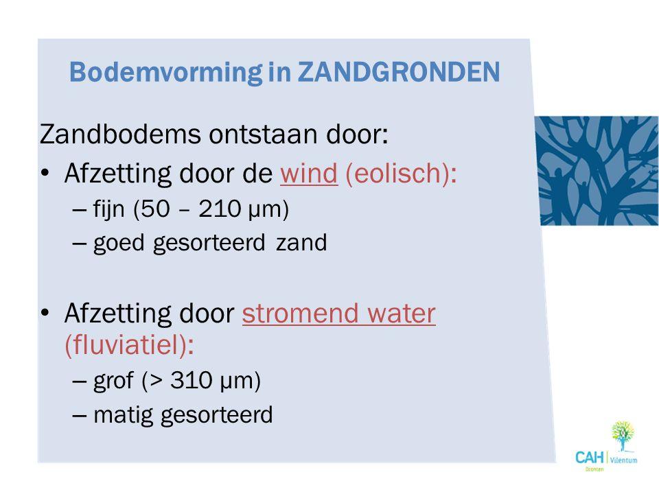 Bodemvorming in ZANDGRONDEN Zandbodems ontstaan door: Afzetting door de wind (eolisch): – fijn (50 – 210 μm) – goed gesorteerd zand Afzetting door str