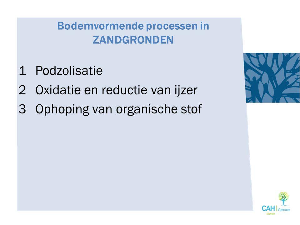 Bodemvormende processen in ZANDGRONDEN 1Podzolisatie 2Oxidatie en reductie van ijzer 3Ophoping van organische stof