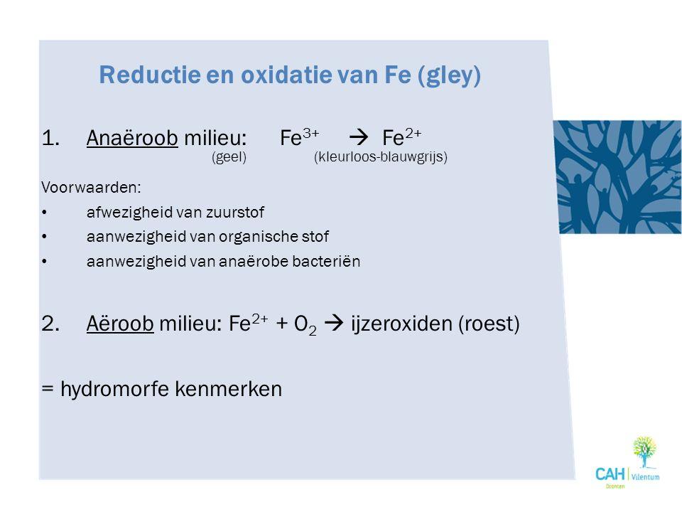 Reductie en oxidatie van Fe (gley) 1.Anaëroob milieu:Fe 3+  Fe 2+ (geel)(kleurloos-blauwgrijs) Voorwaarden: afwezigheid van zuurstof aanwezigheid van
