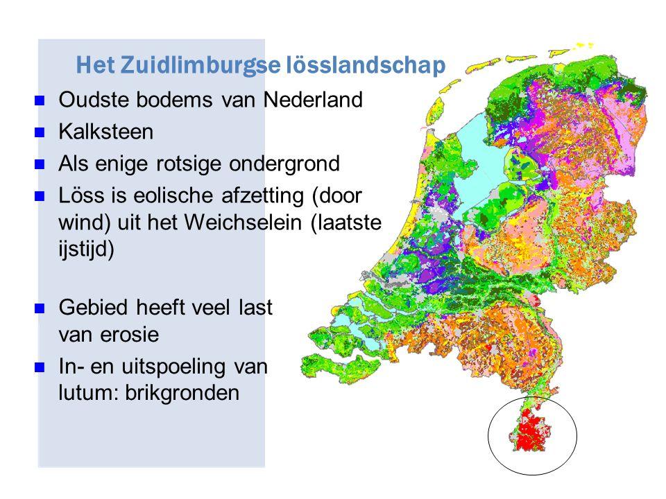 Oudste bodems van Nederland Kalksteen Als enige rotsige ondergrond Löss is eolische afzetting (door wind) uit het Weichselein (laatste ijstijd) Gebied