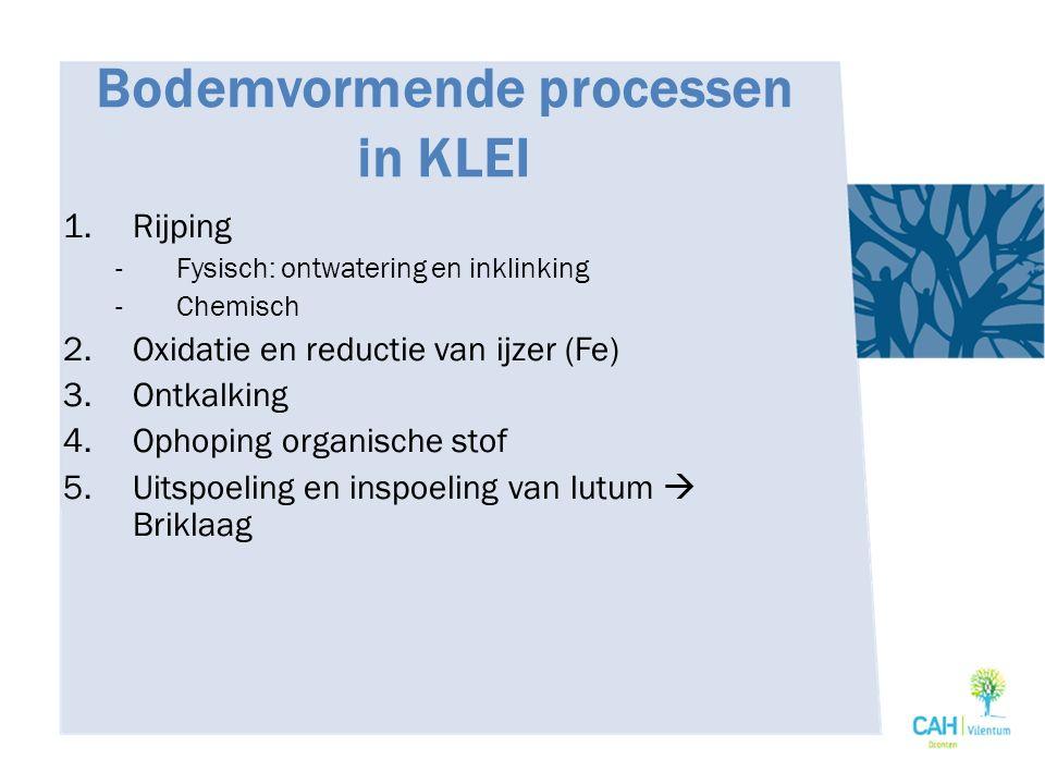 Bodemvormende processen in KLEI 1.Rijping -Fysisch: ontwatering en inklinking -Chemisch 2.Oxidatie en reductie van ijzer (Fe) 3.Ontkalking 4.Ophoping