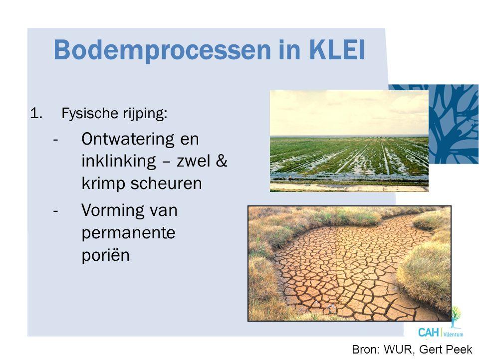Bodemprocessen in KLEI 1.Fysische rijping: -Ontwatering en inklinking – zwel & krimp scheuren -Vorming van permanente poriën Bron: WUR, Gert Peek
