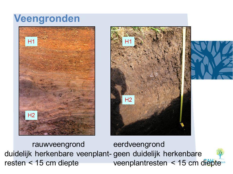 eerdveengrond geen duidelijk herkenbare veenplantresten < 15 cm diepte H1 H2 H1 H2 Veengronden rauwveengrond duidelijk herkenbare veenplant- resten <