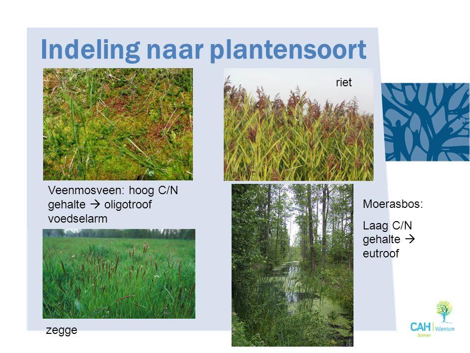 Indeling naar plantensoort Veenmosveen: hoog C/N gehalte  oligotroof voedselarm zegge riet Moerasbos: Laag C/N gehalte  eutroof