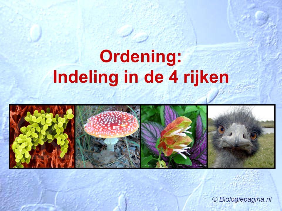 Ordening: Indeling in de 4 rijken © Biologiepagina.nl