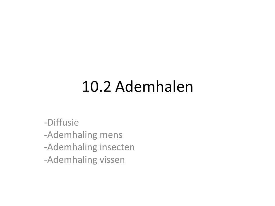 10.2 Ademhalen -Diffusie -Ademhaling mens -Ademhaling insecten -Ademhaling vissen