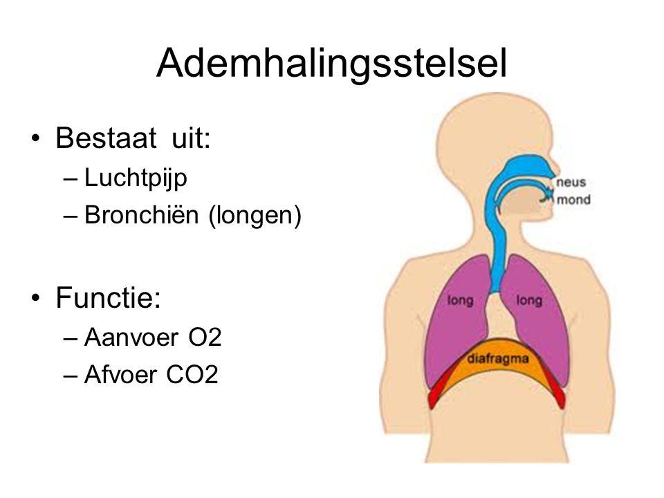 Ademhalingsstelsel Bestaat uit: –Luchtpijp –Bronchiën (longen) Functie: –Aanvoer O2 –Afvoer CO2