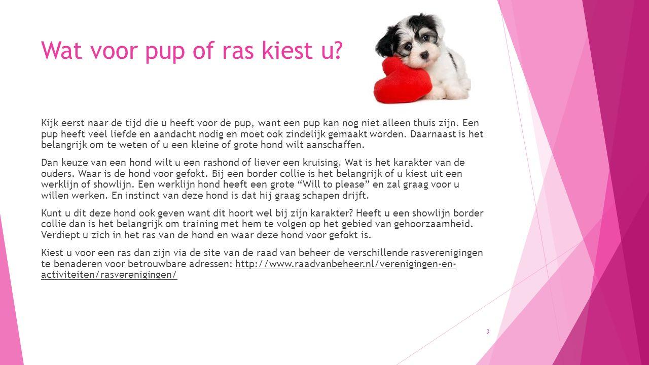 Mijn pup bijt: mopper niet op de pup, maar zorg voor alternatieven !!.