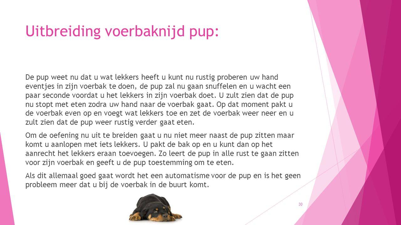 Uitbreiding voerbaknijd pup: De pup weet nu dat u wat lekkers heeft u kunt nu rustig proberen uw hand eventjes in zijn voerbak te doen, de pup zal nu gaan snuffelen en u wacht een paar seconde voordat u het lekkers in zijn voerbak doet.