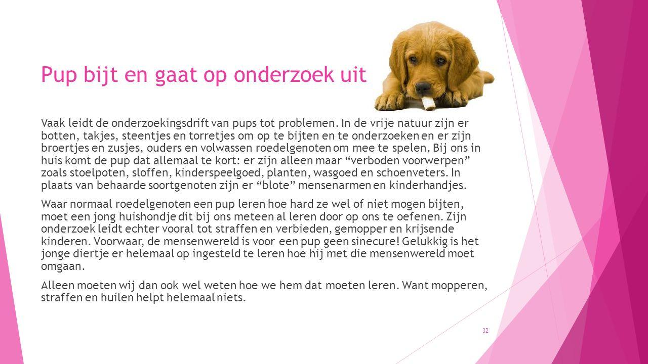 Pup bijt en gaat op onderzoek uit Vaak leidt de onderzoekingsdrift van pups tot problemen. In de vrije natuur zijn er botten, takjes, steentjes en tor