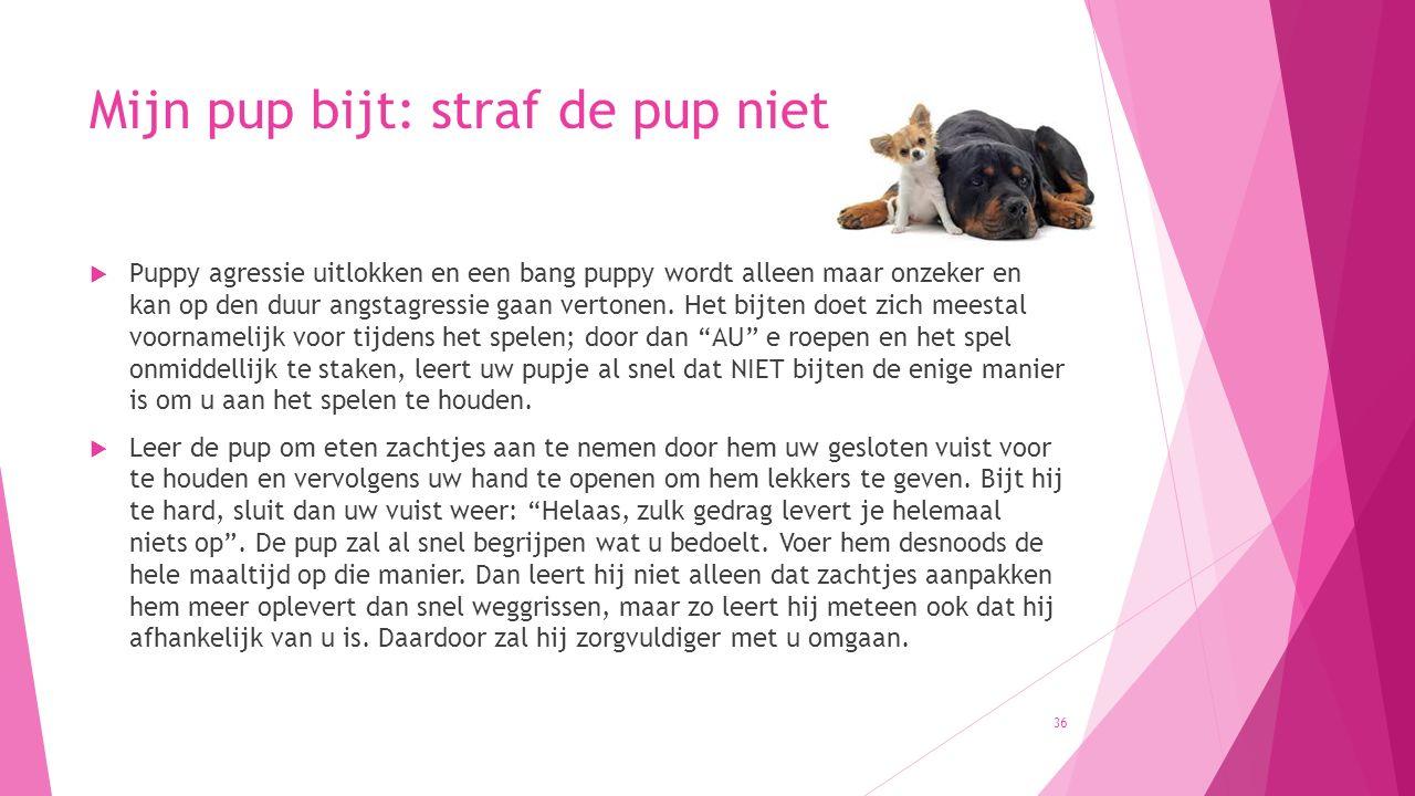 Mijn pup bijt: straf de pup niet  Puppy agressie uitlokken en een bang puppy wordt alleen maar onzeker en kan op den duur angstagressie gaan vertonen