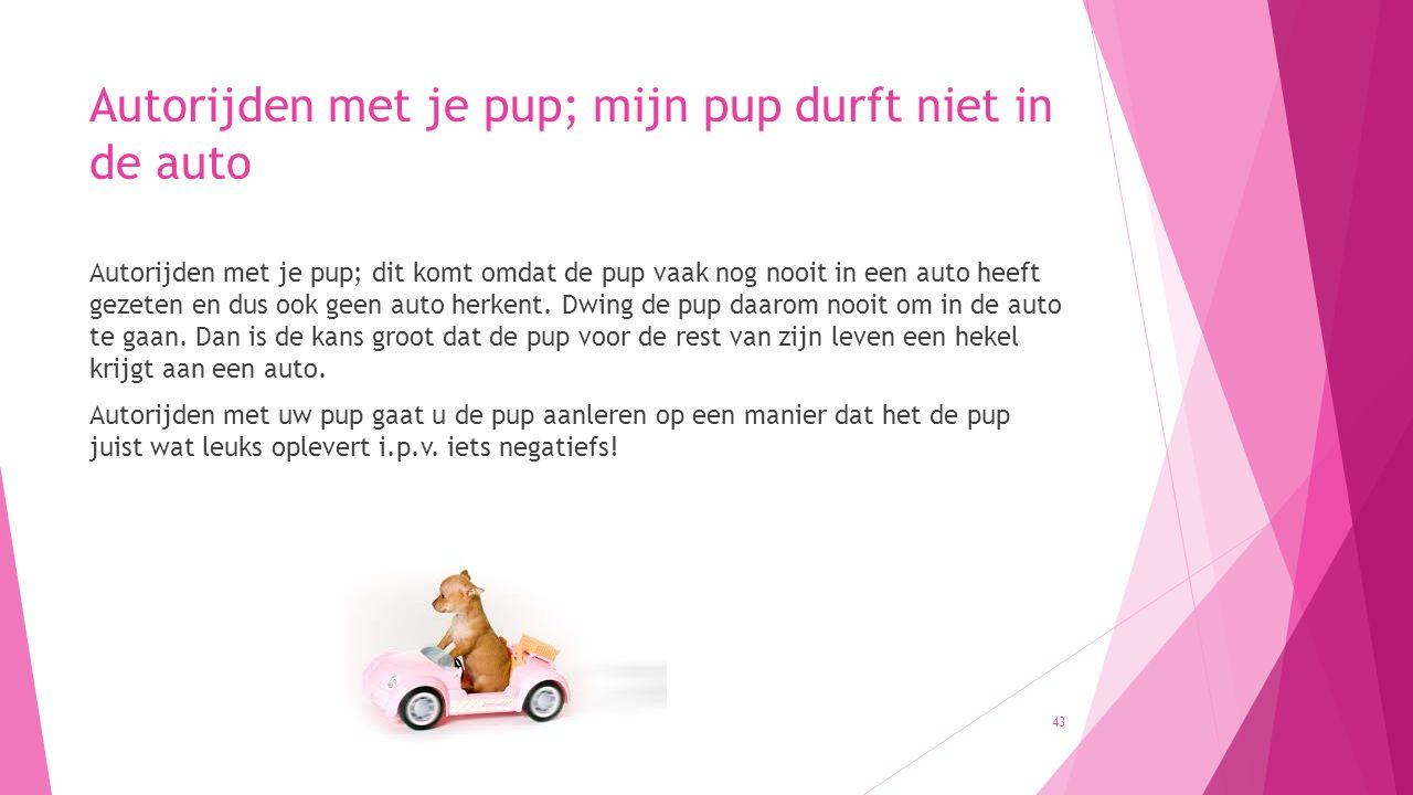 Autorijden met je pup; mijn pup durft niet in de auto Autorijden met je pup; dit komt omdat de pup vaak nog nooit in een auto heeft gezeten en dus ook