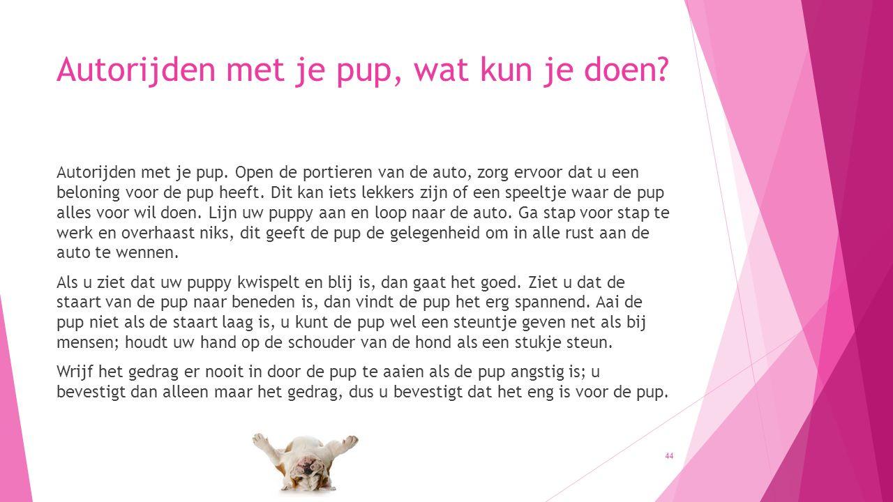 Autorijden met je pup, wat kun je doen? Autorijden met je pup. Open de portieren van de auto, zorg ervoor dat u een beloning voor de pup heeft. Dit ka