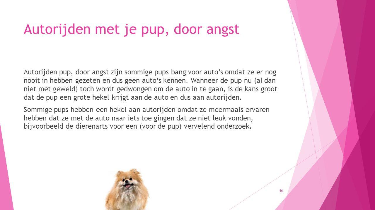 Autorijden met je pup, door angst Autorijden pup, door angst zijn sommige pups bang voor auto's omdat ze er nog nooit in hebben gezeten en dus geen au