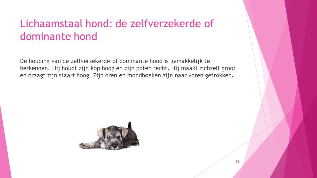 Lichaamstaal hond: de zelfverzekerde of dominante hond De houding van de zelfverzekerde of dominante hond is gemakkelijk te herkennen. Hij houdt zijn