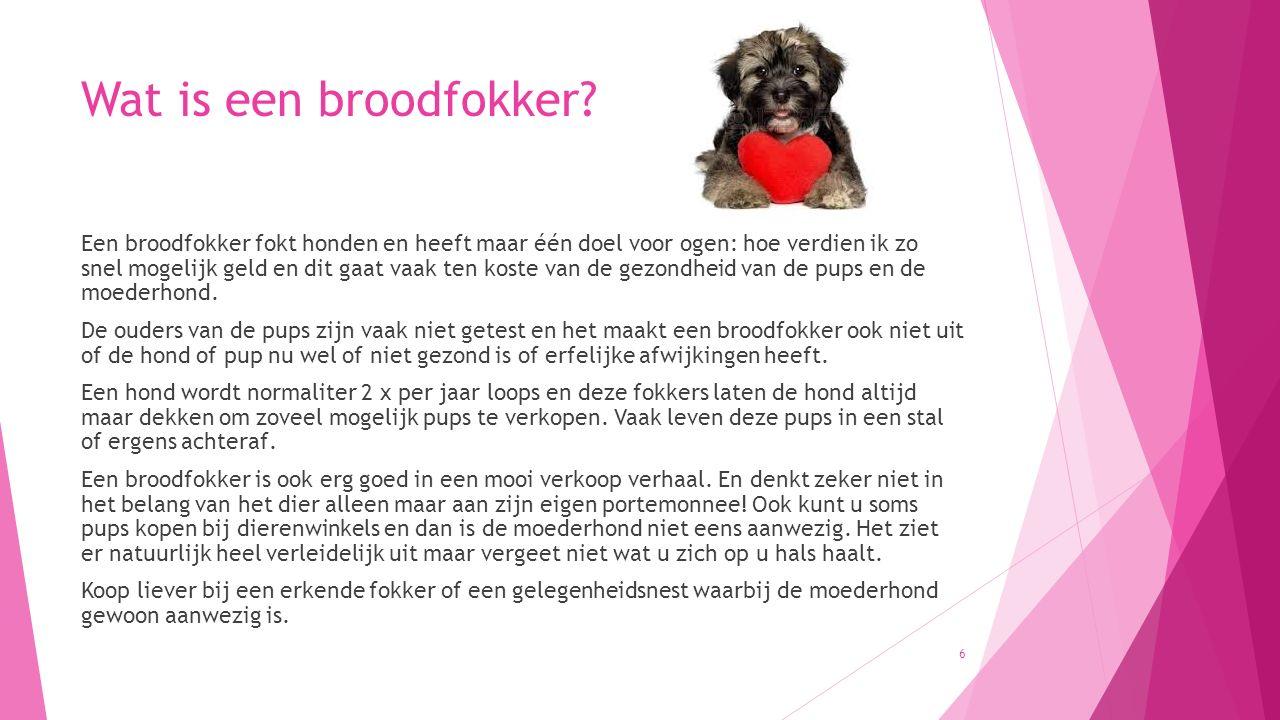 Voerbaknijd pup Hoe voorkom ik voerbaknijd pup: Voerbaknijd pup of voerbaknijd bij honden is vaak dat ze hun voerbak willen verdedigen of dat je niet bij de hond of pup in de buurt mag komen als de pup eet.