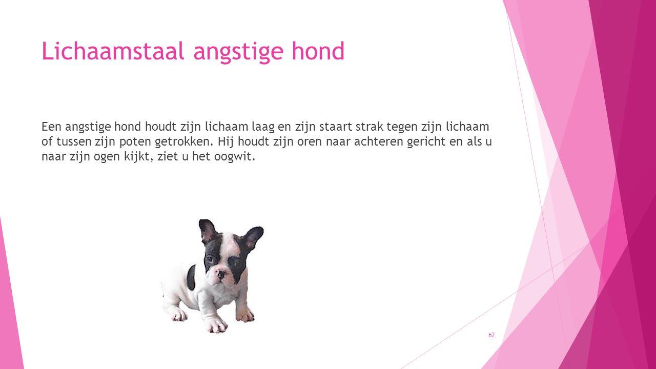 Lichaamstaal angstige hond Een angstige hond houdt zijn lichaam laag en zijn staart strak tegen zijn lichaam of tussen zijn poten getrokken. Hij houdt