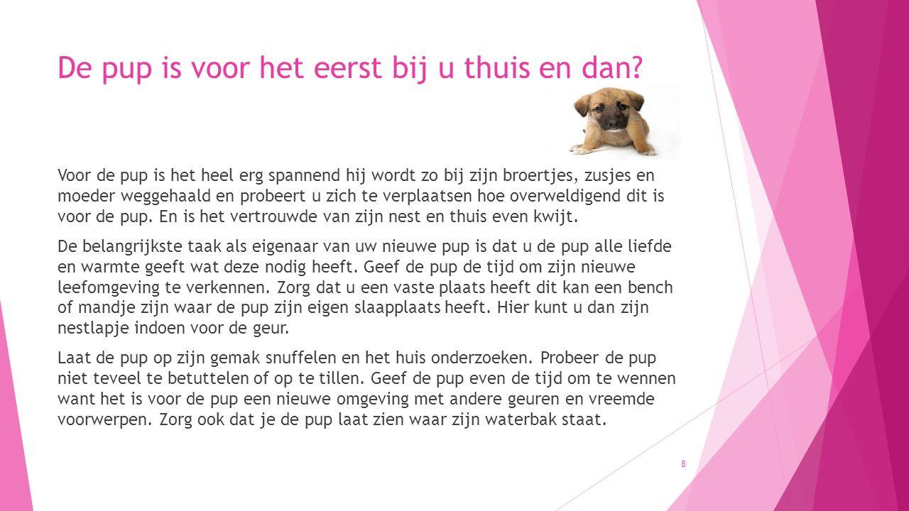 Zindelijkheid hond en onderdanigheidsplasje Uw pup kan ook gaan plassen uit onderdanigheid, ook wel het deemoedsplasje genoemd.