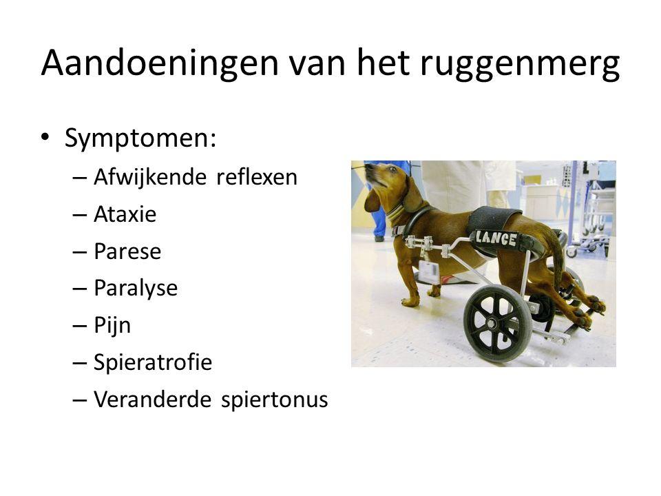 Symptomen: – Afwijkende reflexen – Ataxie – Parese – Paralyse – Pijn – Spieratrofie – Veranderde spiertonus