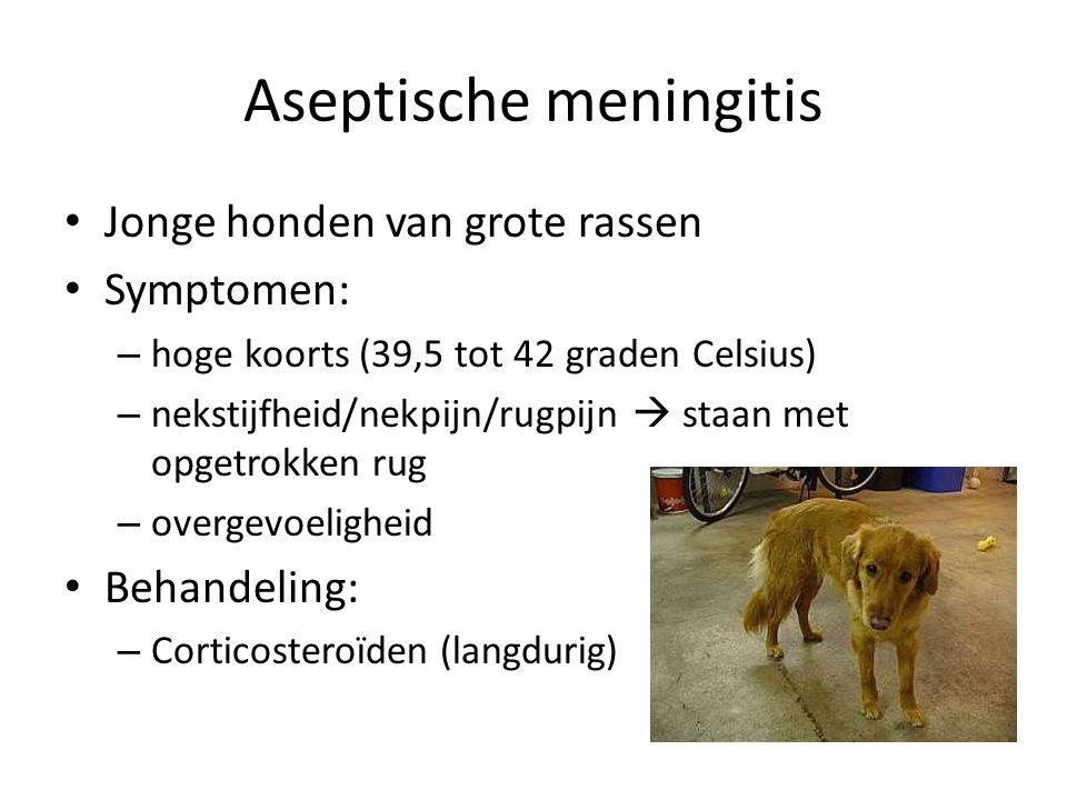 Aseptische meningitis Jonge honden van grote rassen Symptomen: – hoge koorts (39,5 tot 42 graden Celsius) – nekstijfheid/nekpijn/rugpijn  staan met o