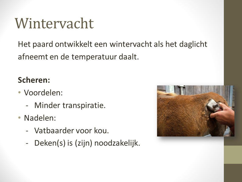 Wintervacht Het paard ontwikkelt een wintervacht als het daglicht afneemt en de temperatuur daalt.