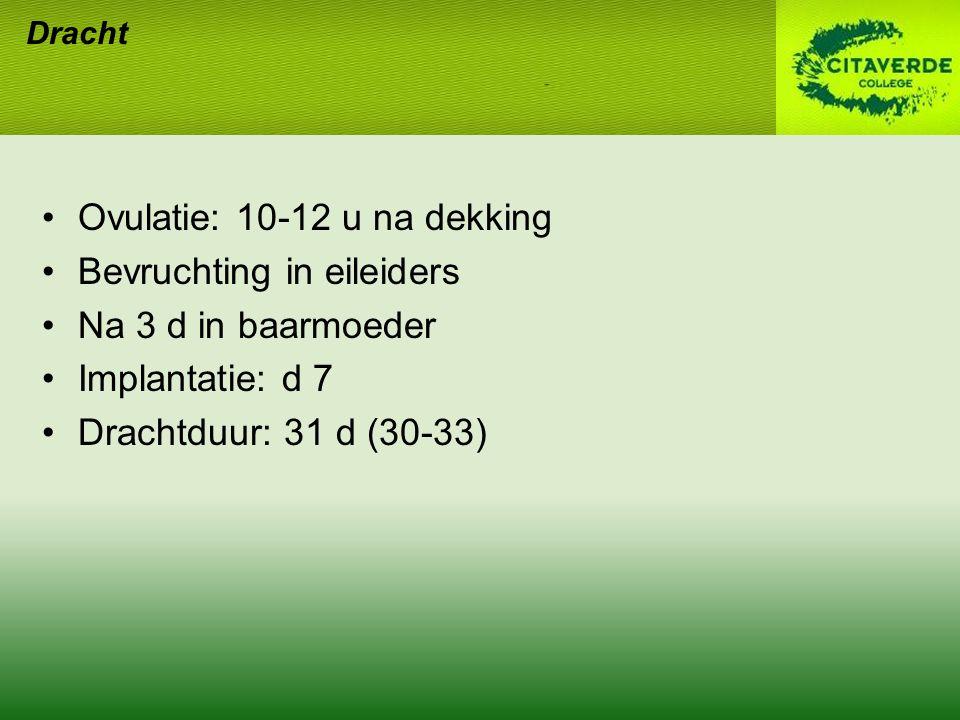 Ovulatie: 10-12 u na dekking Bevruchting in eileiders Na 3 d in baarmoeder Implantatie: d 7 Drachtduur: 31 d (30-33) Dracht
