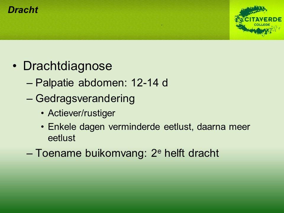 Drachtdiagnose –Palpatie abdomen: 12-14 d –Gedragsverandering Actiever/rustiger Enkele dagen verminderde eetlust, daarna meer eetlust –Toename buikomv