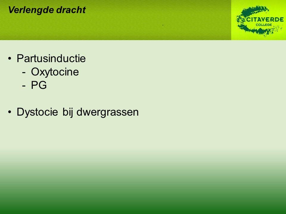 Verlengde dracht Partusinductie -Oxytocine -PG Dystocie bij dwergrassen
