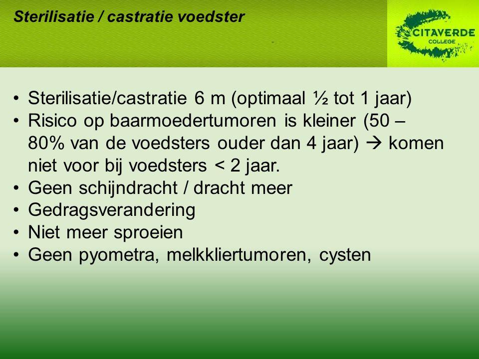 Sterilisatie / castratie voedster Sterilisatie/castratie 6 m (optimaal ½ tot 1 jaar) Risico op baarmoedertumoren is kleiner (50 – 80% van de voedsters