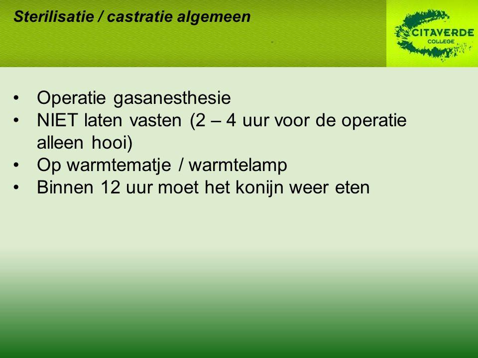 Sterilisatie / castratie algemeen Operatie gasanesthesie NIET laten vasten (2 – 4 uur voor de operatie alleen hooi) Op warmtematje / warmtelamp Binnen 12 uur moet het konijn weer eten