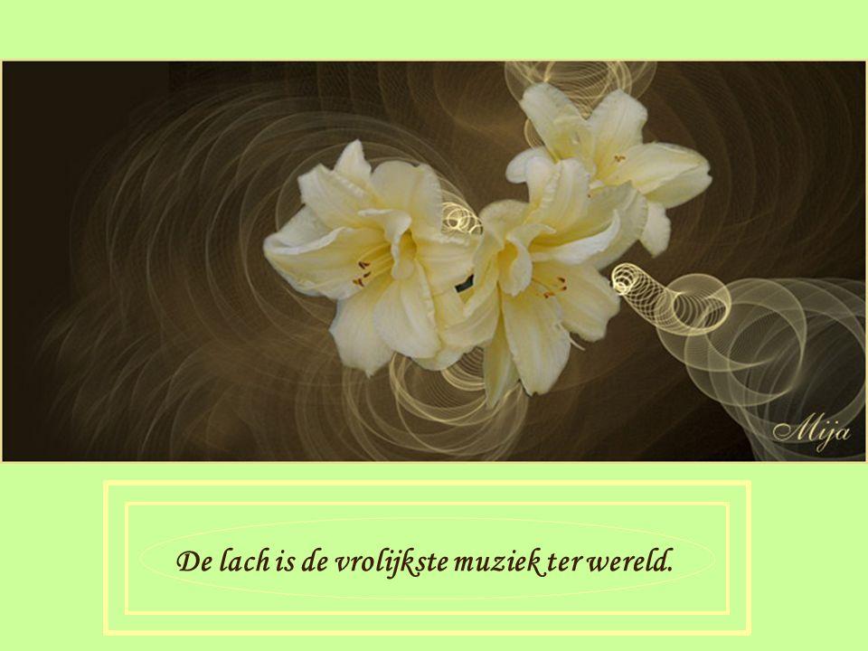 Bloemen kunnen je gelukkig maken als je hun schoonheid ziet
