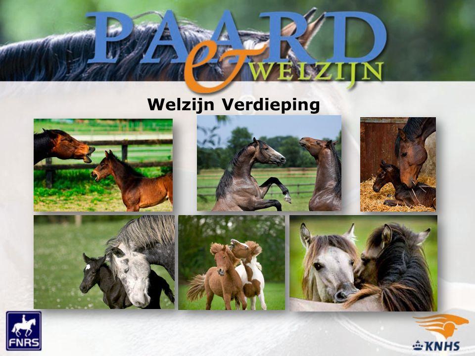 Welzijn Verdieping