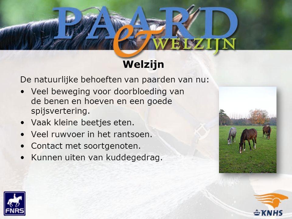 De natuurlijke behoeften van paarden van nu: Veel beweging voor doorbloeding van de benen en hoeven en een goede spijsvertering.