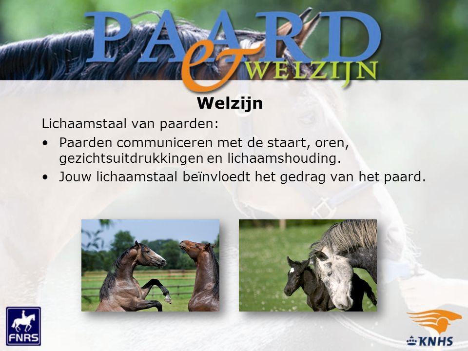 Lichaamstaal van paarden: Paarden communiceren met de staart, oren, gezichtsuitdrukkingen en lichaamshouding.