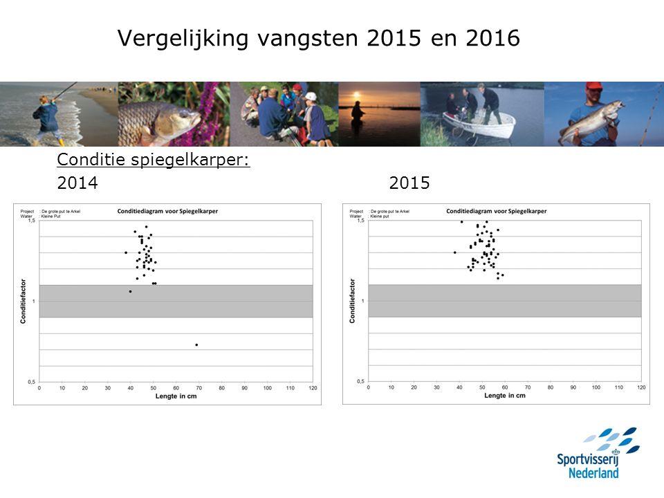 Vergelijking vangsten 2015 en 2016 Conditie spiegelkarper: 2014 2015