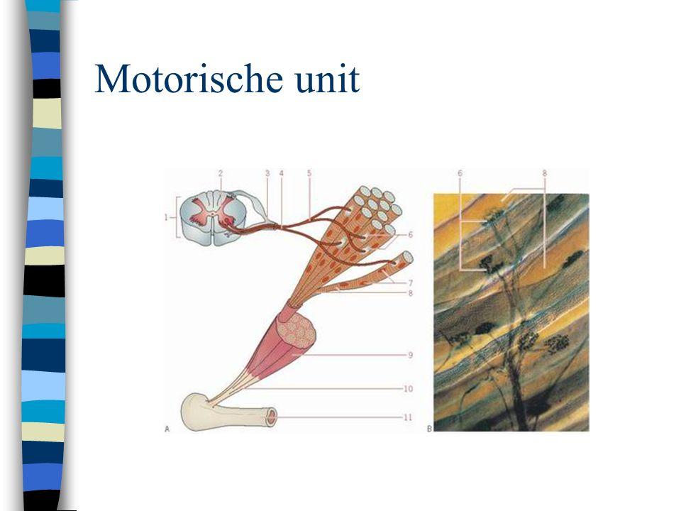 Motorische unit