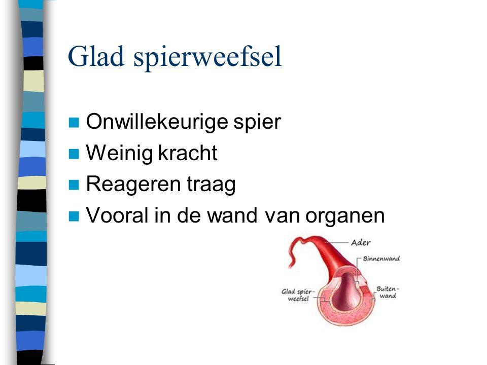 Glad spierweefsel Onwillekeurige spier Weinig kracht Reageren traag Vooral in de wand van organen