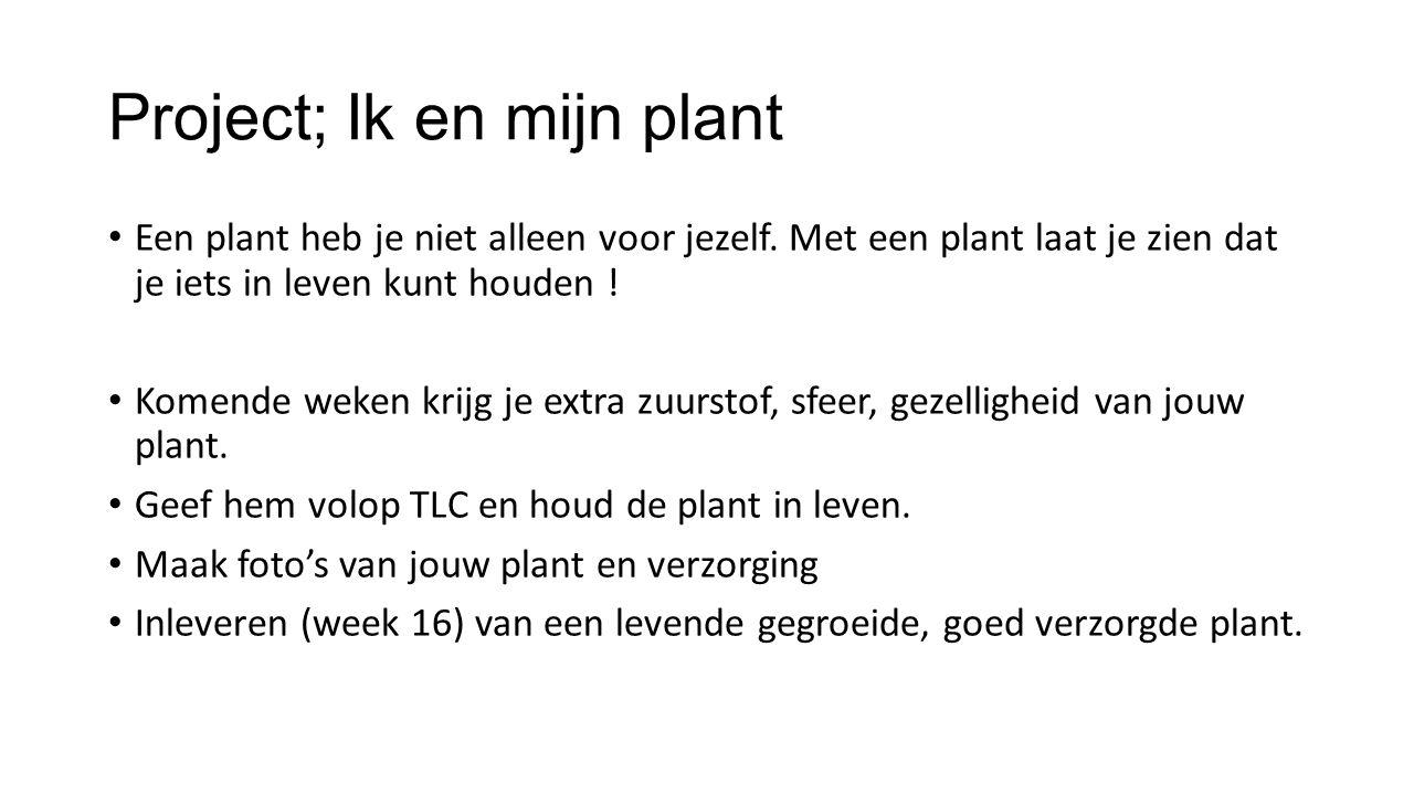 Project; Ik en mijn plant Een plant heb je niet alleen voor jezelf. Met een plant laat je zien dat je iets in leven kunt houden ! Komende weken krijg