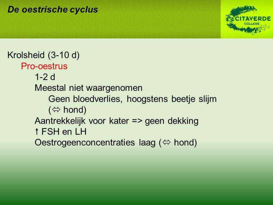 De oestrische cyclus Krolsheid (3-10 d) Pro-oestrus 1-2 d Meestal niet waargenomen Geen bloedverlies, hoogstens beetje slijm (  hond) Aantrekkelijk voor kater => geen dekking  FSH en LH Oestrogeenconcentraties laag (  hond)