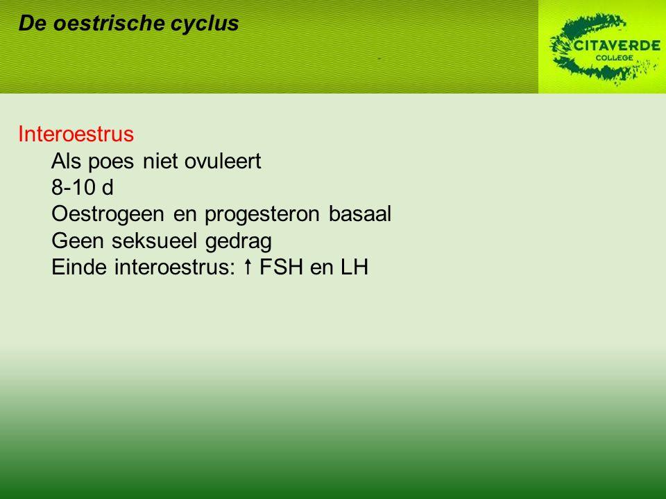 De oestrische cyclus Interoestrus Als poes niet ovuleert 8-10 d Oestrogeen en progesteron basaal Geen seksueel gedrag Einde interoestrus:  FSH en LH