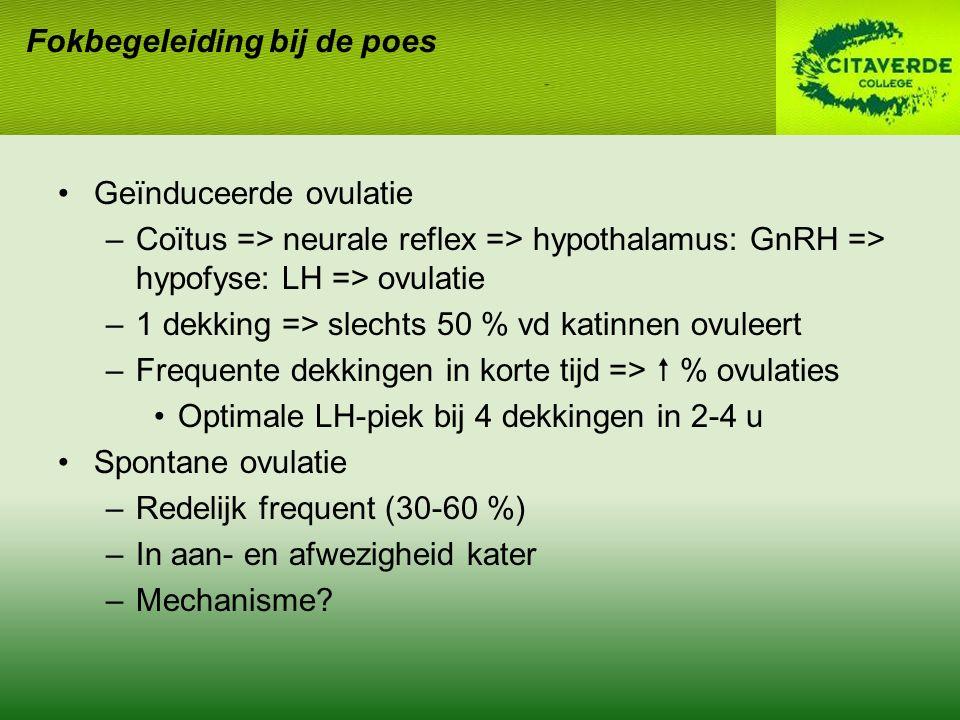 Geïnduceerde ovulatie –Coïtus => neurale reflex => hypothalamus: GnRH => hypofyse: LH => ovulatie –1 dekking => slechts 50 % vd katinnen ovuleert –Frequente dekkingen in korte tijd =>  % ovulaties Optimale LH-piek bij 4 dekkingen in 2-4 u Spontane ovulatie –Redelijk frequent (30-60 %) –In aan- en afwezigheid kater –Mechanisme?