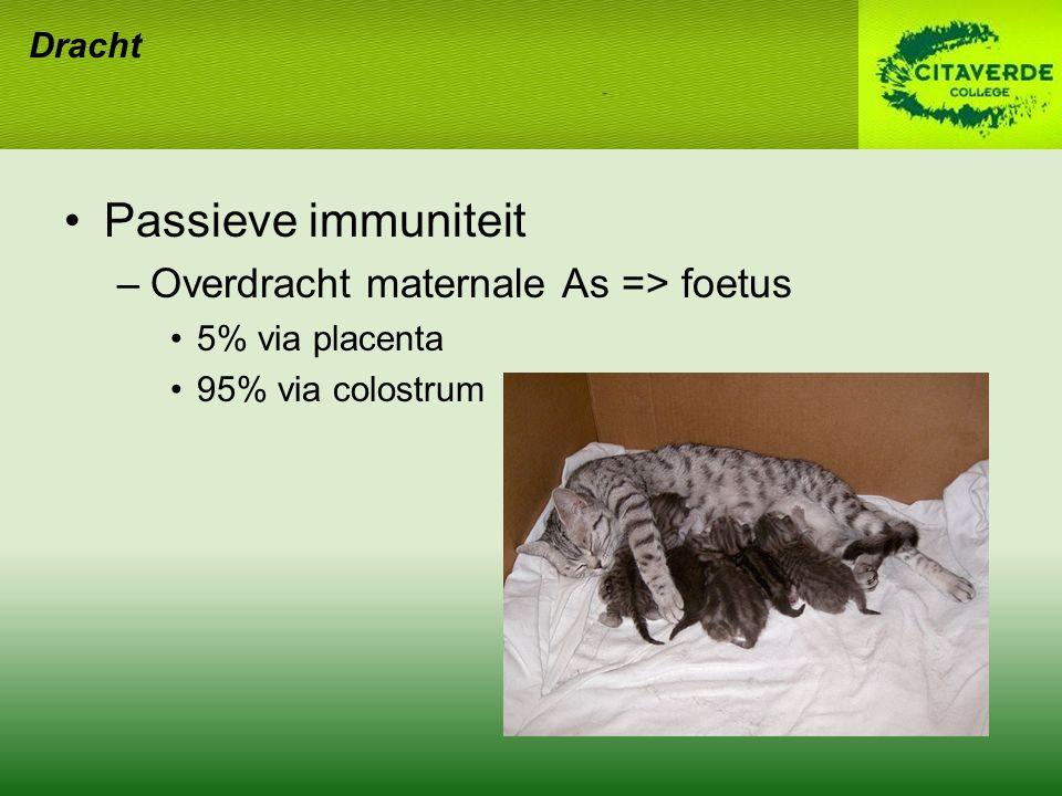 Dracht Passieve immuniteit –Overdracht maternale As => foetus 5% via placenta 95% via colostrum