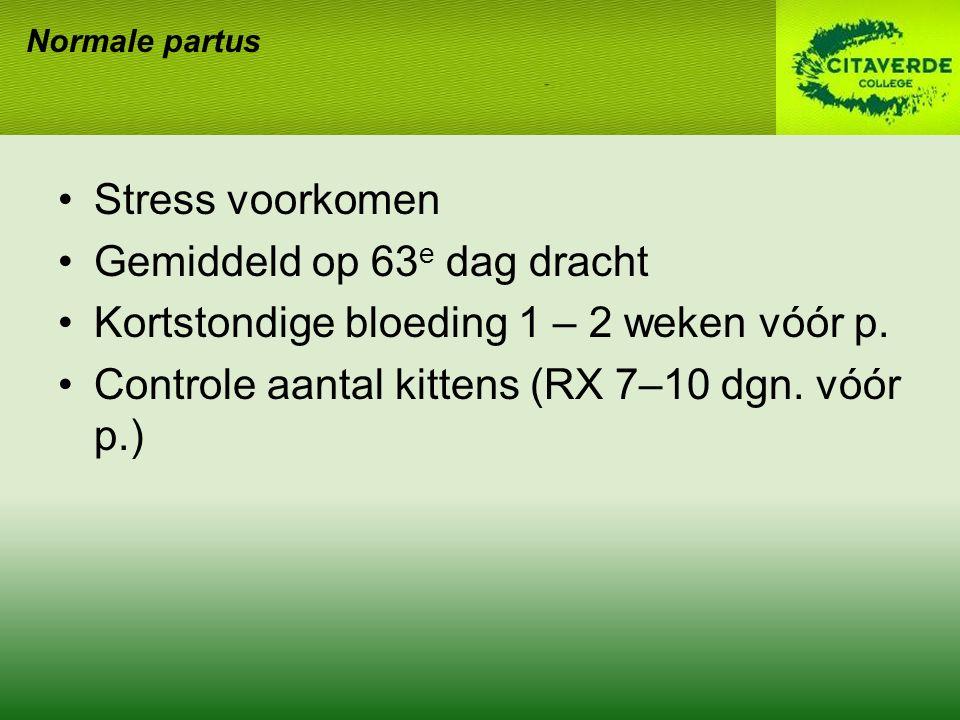 Normale partus Stress voorkomen Gemiddeld op 63 e dag dracht Kortstondige bloeding 1 – 2 weken vóór p.