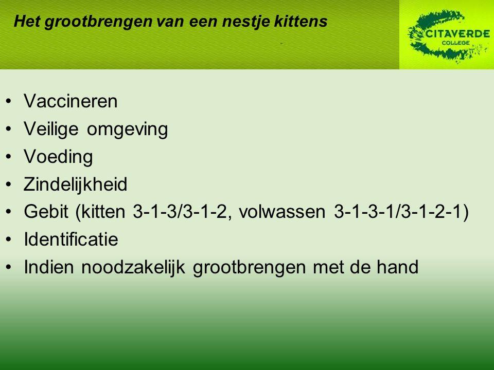 Het grootbrengen van een nestje kittens Vaccineren Veilige omgeving Voeding Zindelijkheid Gebit (kitten 3-1-3/3-1-2, volwassen 3-1-3-1/3-1-2-1) Identificatie Indien noodzakelijk grootbrengen met de hand