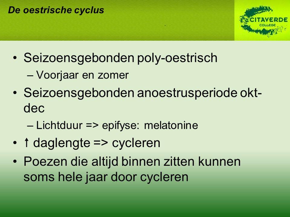 De oestrische cyclus Anoestrus Enkele maanden in herfst & winter 30-90 d Rustperiode Oestrogeen en progesteron basaal Na partus vaak lactatie-anoestrus: 4-5 w 2-3 w na spenen terug krols Sommigen worden na 2-3 w lactatie weer krols